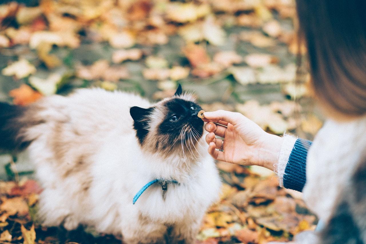 personne qui donne une friandise à un chat